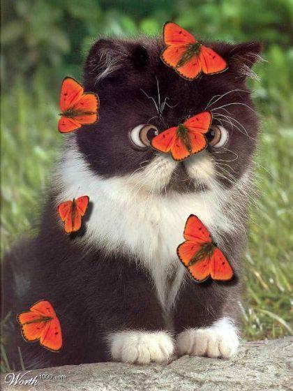 Котик с бабочками! (420x560, 44Kb)