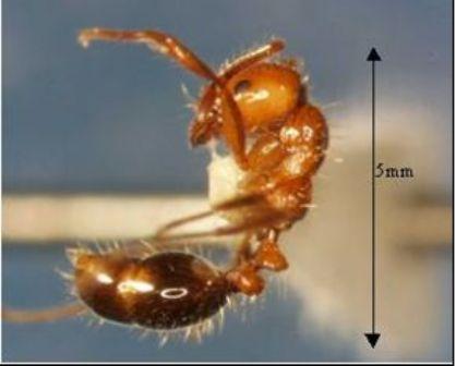 Штат Техас подвергся нашествию муравьёв, которые атакуют электроприборы.