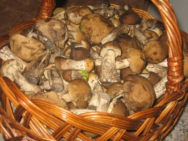 Как варить подберезовики Сколько варить грибы