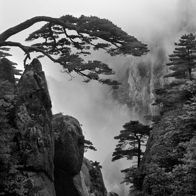 Картинки о природе черно белые