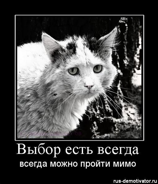 1288512381_vyibor-est-vsegda (510x591, 52Kb)