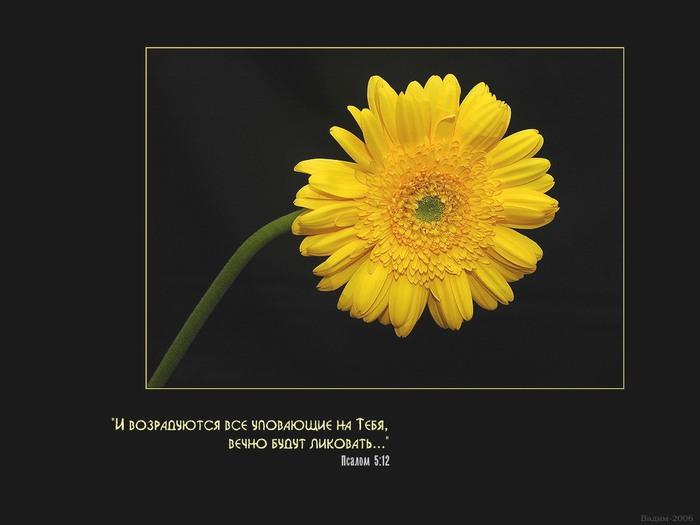 photo10 (700x525, 48Kb)