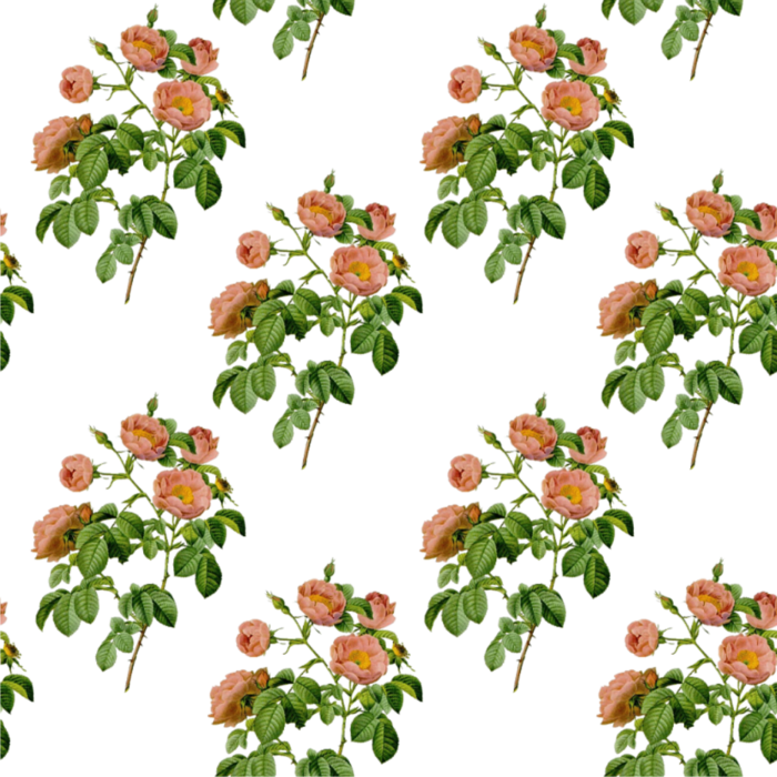Клипарт розы на прозрачном фоне