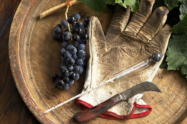 Winemaker-Instruments (600x400, 68Kb)