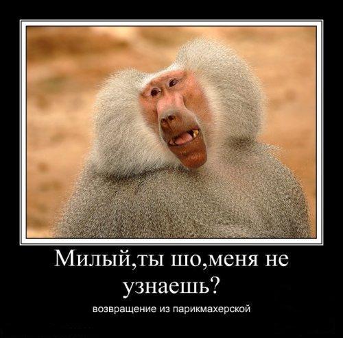 смешные приколы/3185107_obezyana (500x494, 115Kb)