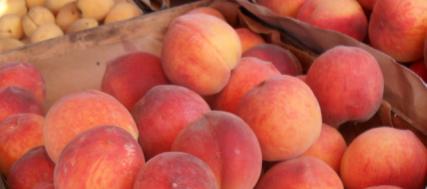 Персики (427x189, 222Kb)
