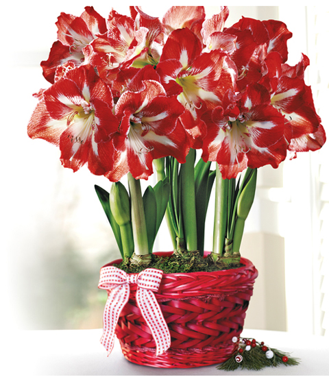 winter-flowers2 (480x550, 257Kb)