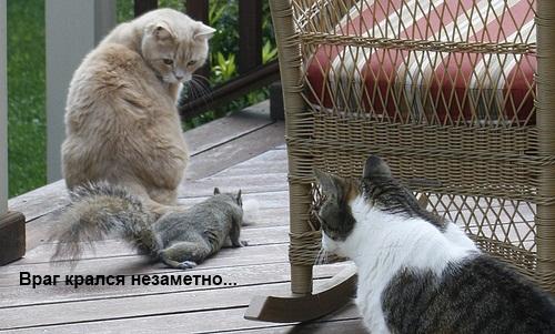 очень смешные фото кошки. кошки смешные очень смешные фото кошки.