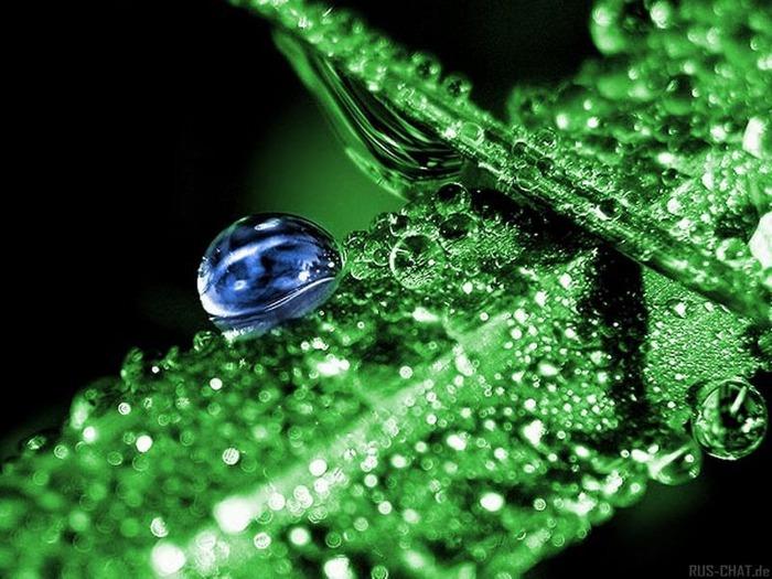Макро фото - природа, капли, насекомые 1