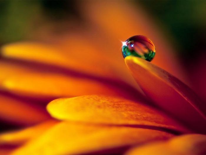 Макро фото - природа, капли, насекомые 11