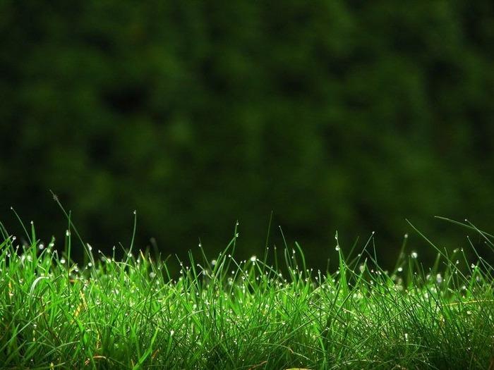 Макро фото - природа, капли, насекомые 13