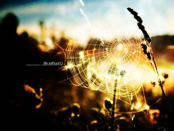 Макро фото - природа, капли, насекомые 14