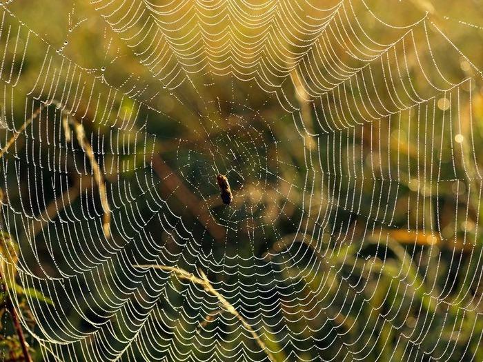 Макро фото - природа, капли, насекомые 15