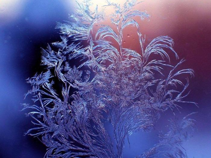 Макро фото - природа, капли, насекомые 16
