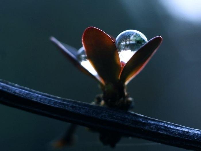 Макро фото - природа, капли, насекомые 27