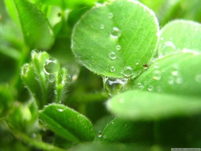 Макро фото - природа, капли, насекомые 28