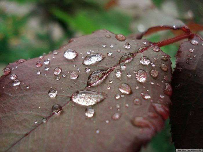 Макро фото - природа, капли, насекомые 29