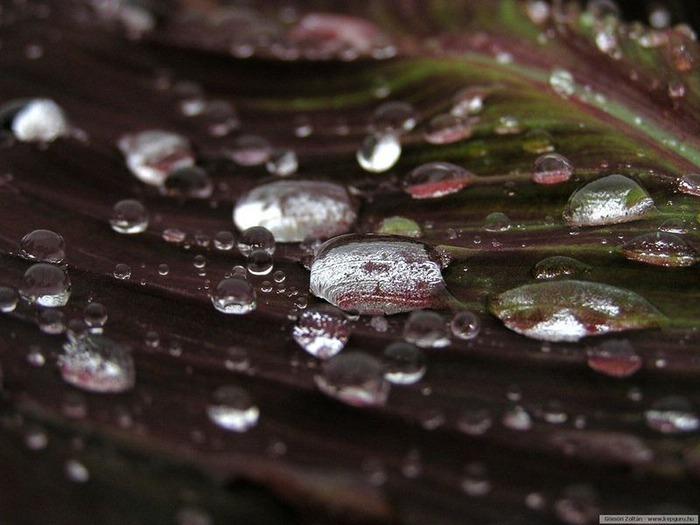 Макро фото - природа, капли, насекомые 30