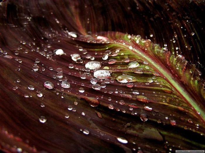 Макро фото - природа, капли, насекомые 31