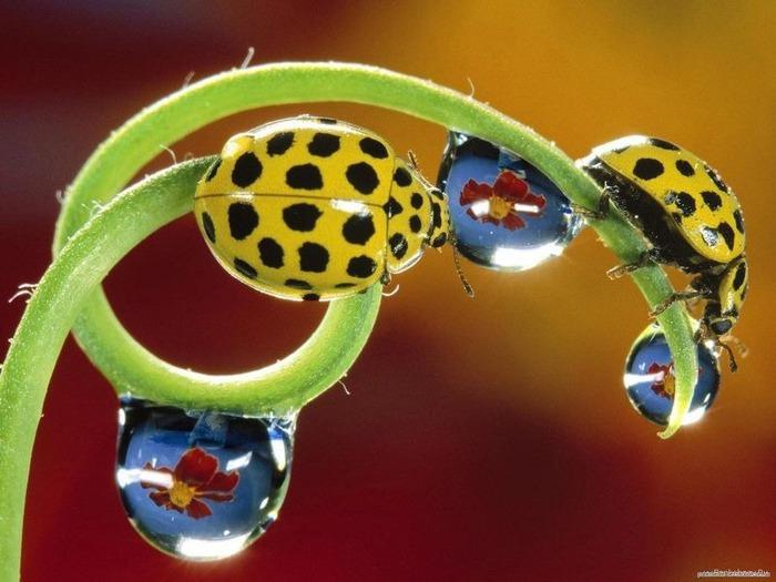 Макро фото - природа, капли, насекомые 65