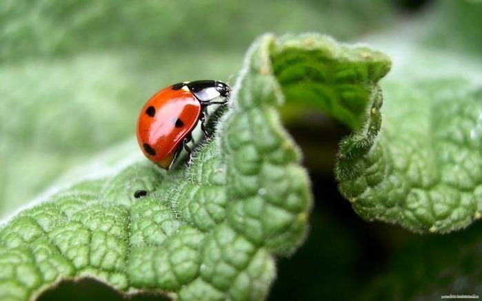 Макро фото - природа, капли, насекомые 67