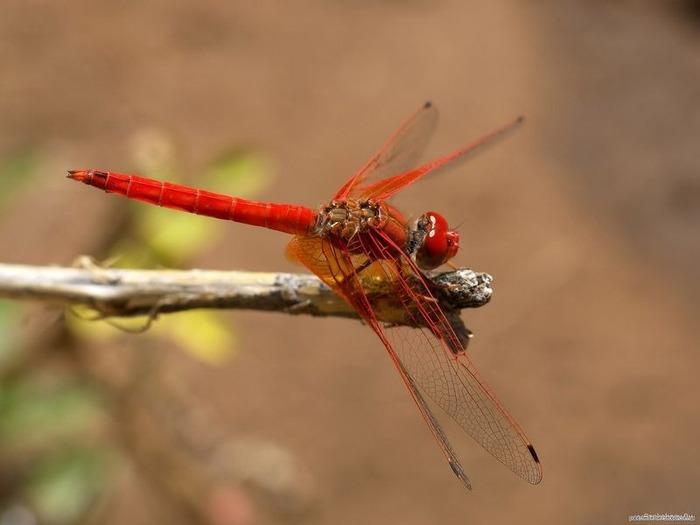 Макро фото - природа, капли, насекомые 71