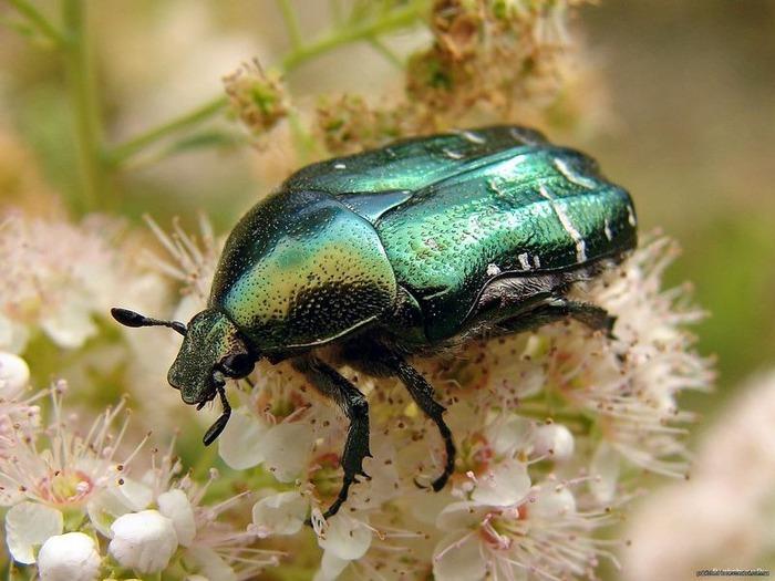 Макро фото - природа, капли, насекомые 72