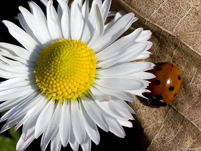 Макро фото - природа, капли, насекомые 73