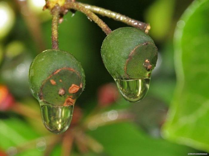 Макро фото - природа, капли, насекомые 77