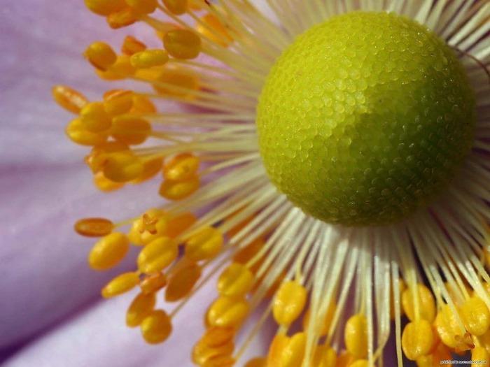 Макро фото - природа, капли, насекомые 79