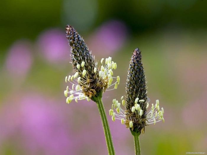 Макро фото - природа, капли, насекомые 83