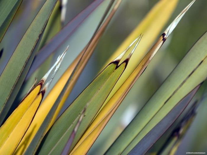 Макро фото - природа, капли, насекомые 88