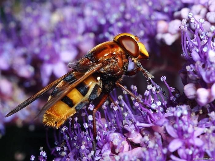 Макро фото - природа, капли, насекомые 90