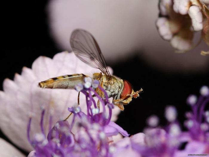 Макро фото - природа, капли, насекомые 92