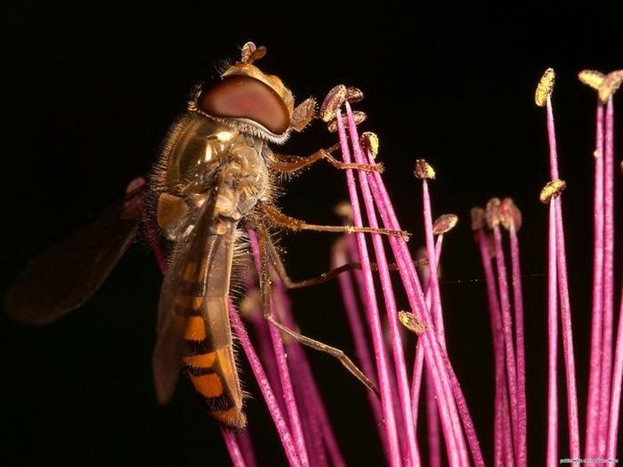 Макро фото - природа, капли, насекомые 94
