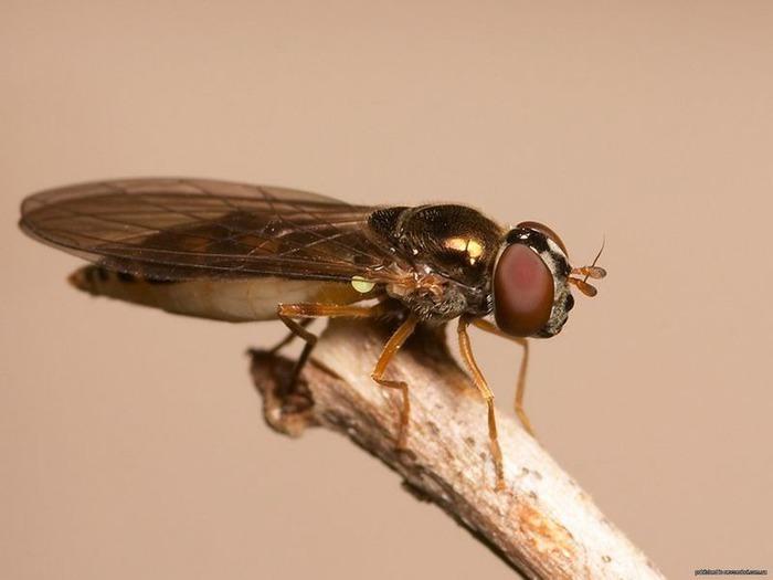 Макро фото - природа, капли, насекомые 98