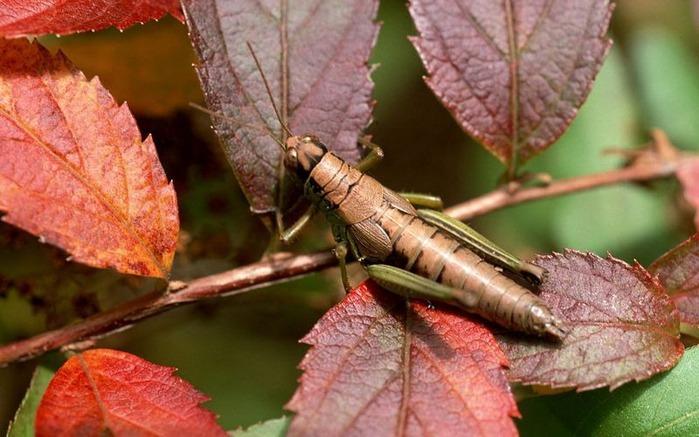 Макро фото - природа, капли, насекомые 101