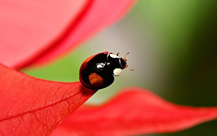 Макро фото - природа, капли, насекомые 103