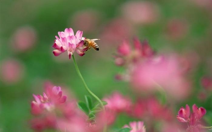 Макро фото - природа, капли, насекомые 105