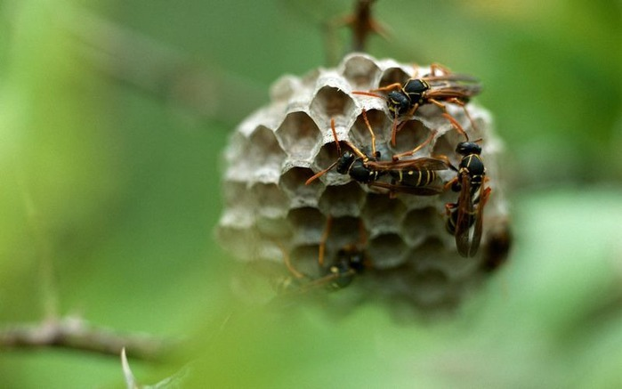 Макро фото - природа, капли, насекомые 108