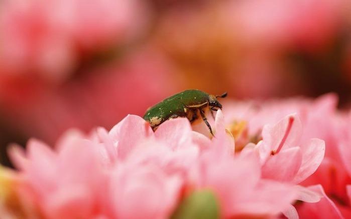 Макро фото - природа, капли, насекомые 116