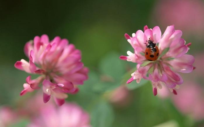 Макро фото - природа, капли, насекомые 118