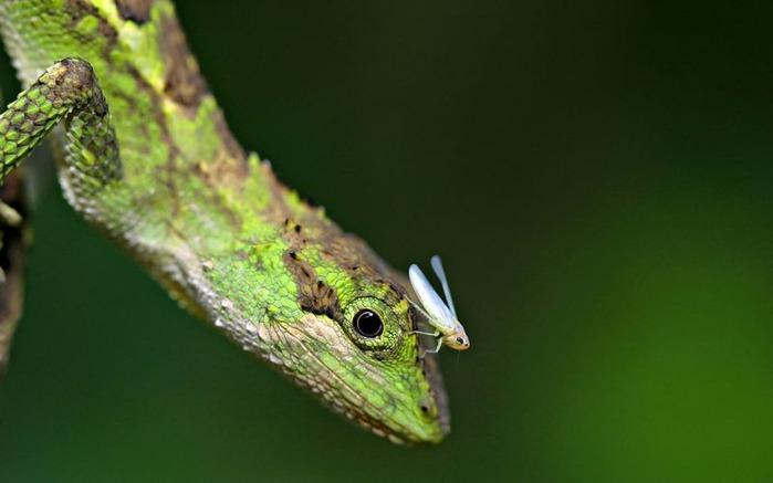 Макро фото - природа, капли, насекомые 120