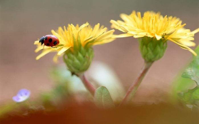 Макро фото - природа, капли, насекомые 121