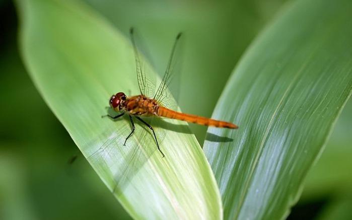Макро фото - природа, капли, насекомые 123