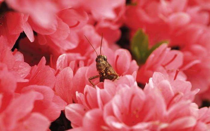 Макро фото - природа, капли, насекомые 125