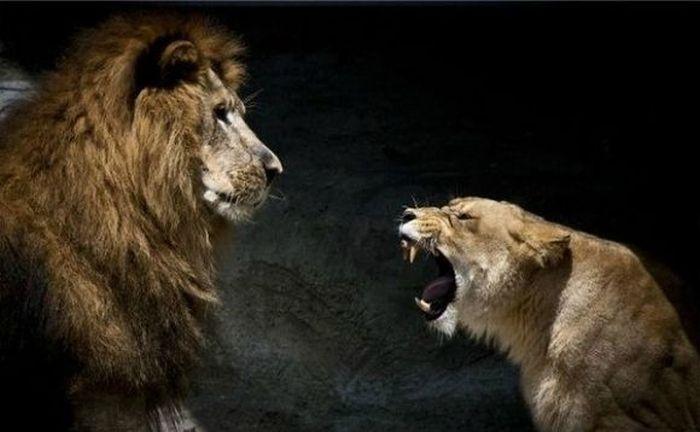 Вдруг заходит царь зверей