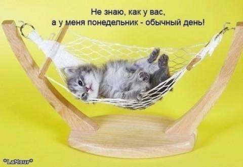 кошка (480x330, 32Kb)
