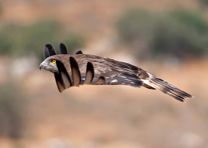 Фото 10, Птицы в полёте (26 фотографий)