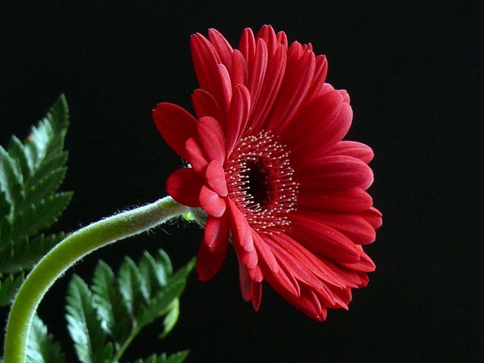 Цветок тома